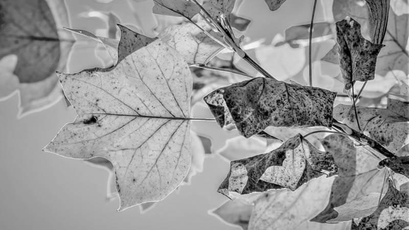 ryd fortovet for visne blade